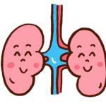 腎臓ってなにするところ?~おしっこの作られ方~